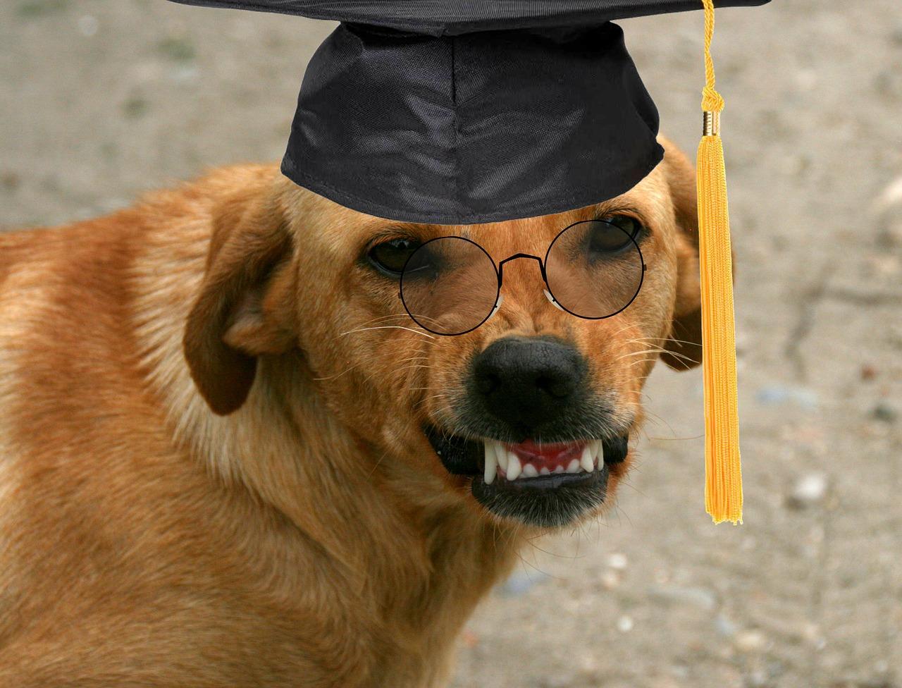 dog-2731419_1280
